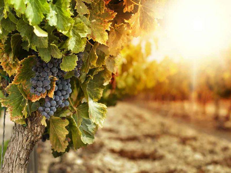 PRE VÝROBCOV VÍNA - Rady a triky pre výrobcov vína
